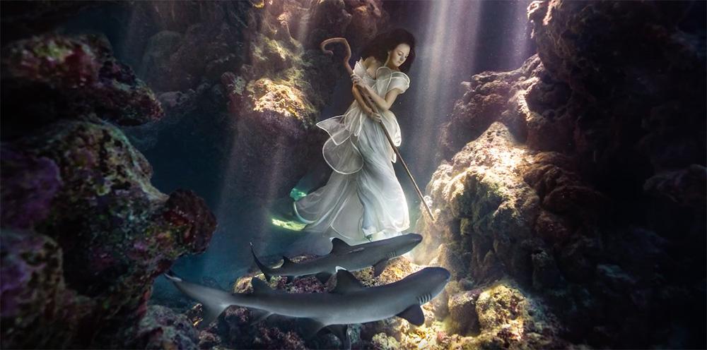 Shark-Shepard-by-Benjamin-Von-Wong