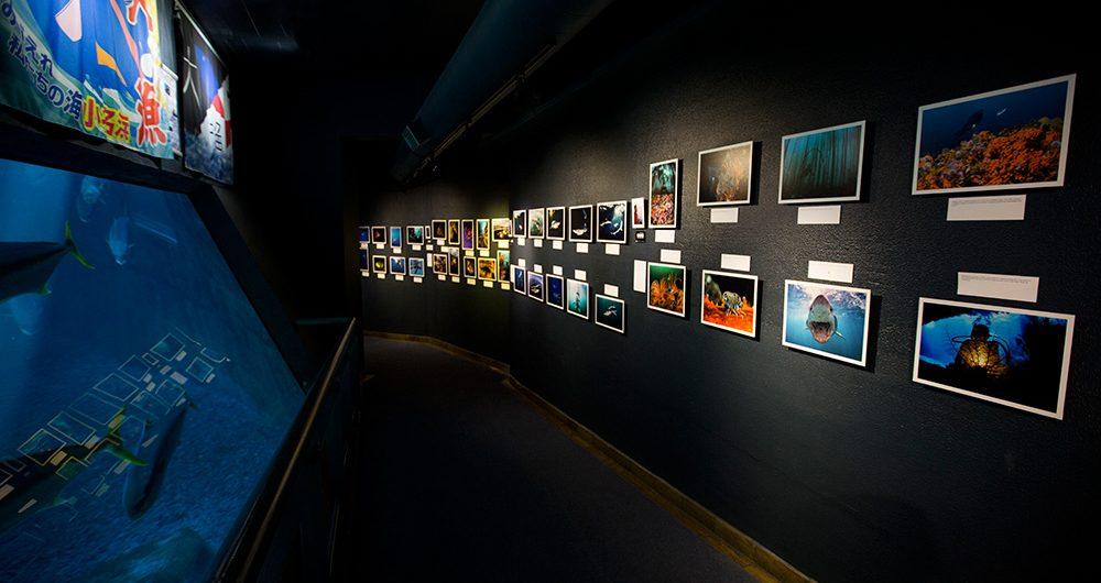 Aquarium-Exhibition-Cape-Town-02
