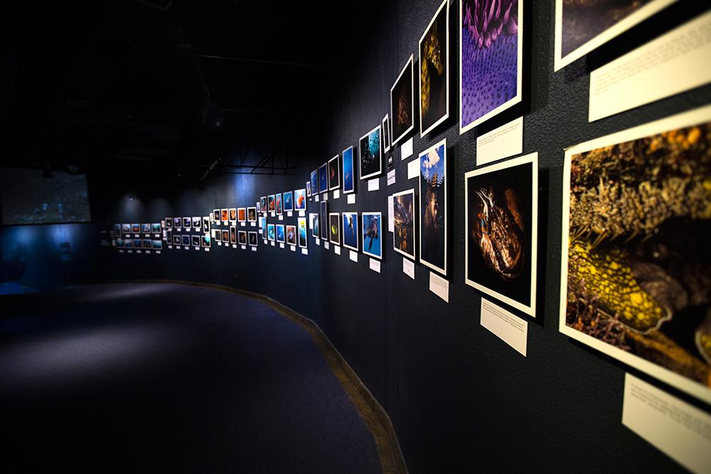 Aquarium-Exhibition-Cape-Town