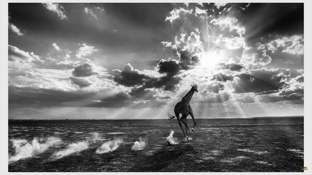 David-Yarrow-Wildlife-Photography-Interview