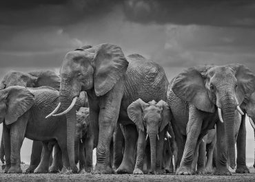 David-Yarrow-Wildlife-Photography-Interview