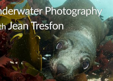 Underwater photography with Jean Tresfon