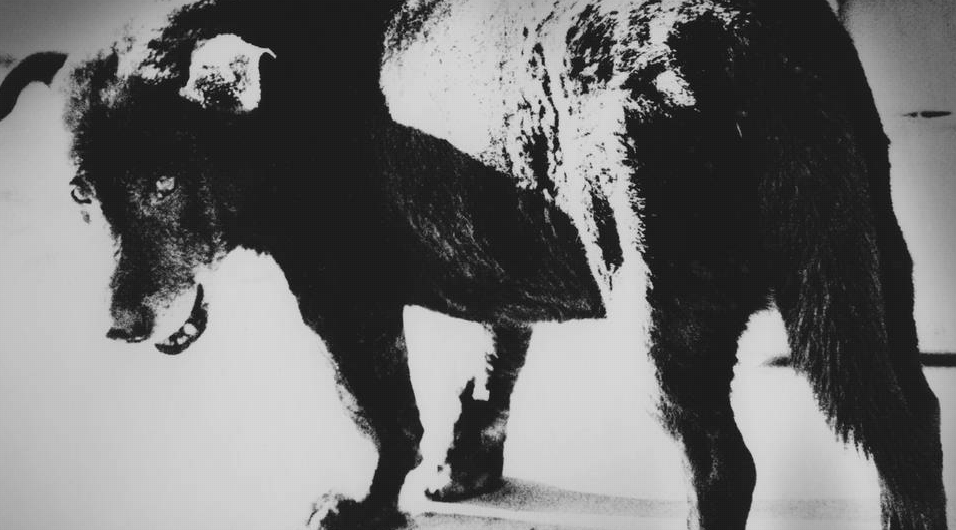 Daido Moriyama: In Pictures