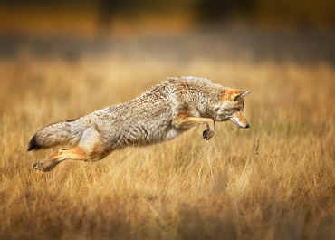 10 Amazing Wildlife Photography Tips by Steve Perry