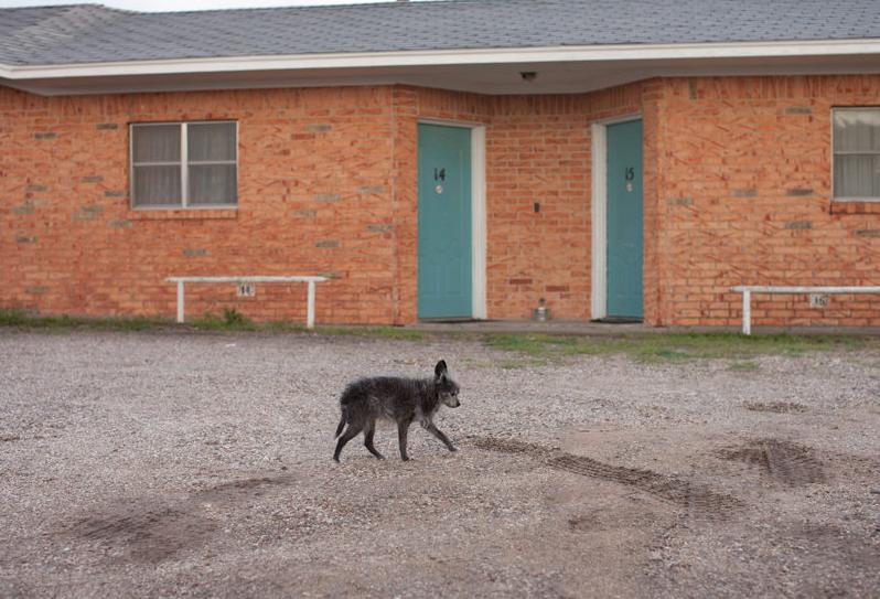 Senior Dogs Across America, by Nancy LeVine
