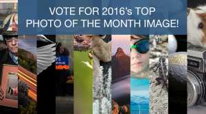 Vote For Your Favourite 2016 Photo Of The Month Image!