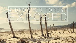 """""""A Drowned Forest Exposed"""", Time-lapse by Liesel Kershoff"""