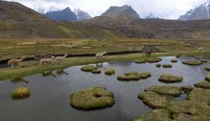 "See the Stunning Wildlife Footage in ""Wild Planet"" by Karim Iliya"