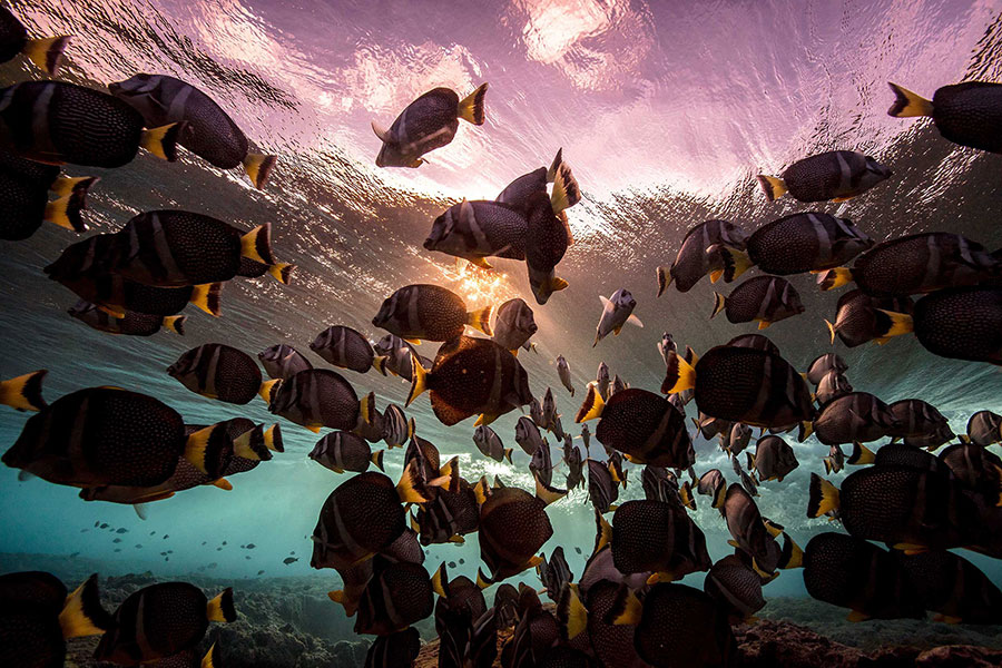 Matt-Porteous-Below-the-Breaking-Wave-Underwater-Photography-Inspiration