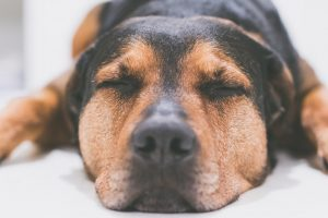 Top Tips For Pet Photography