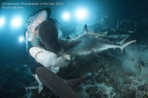 Dive In with the Underwater Photographer of the Year 2019 Winners