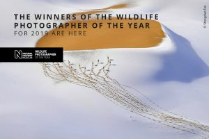 Winners of the Wildlife Photographer of the Year For 2019 Are Here