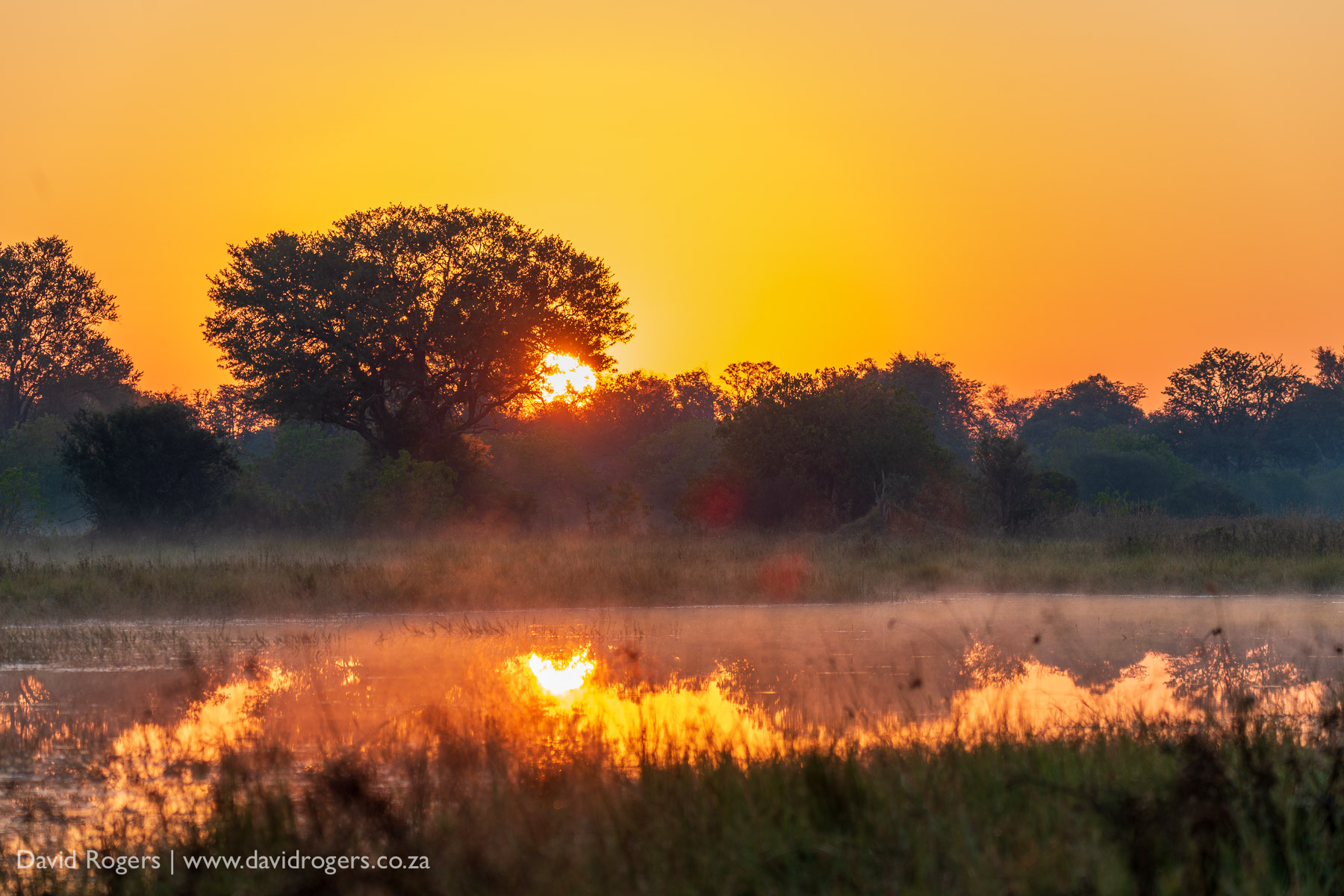 sunset shot on the Sigma 60-600mm f/4.5-6.3 DG OS HSM Sports lens