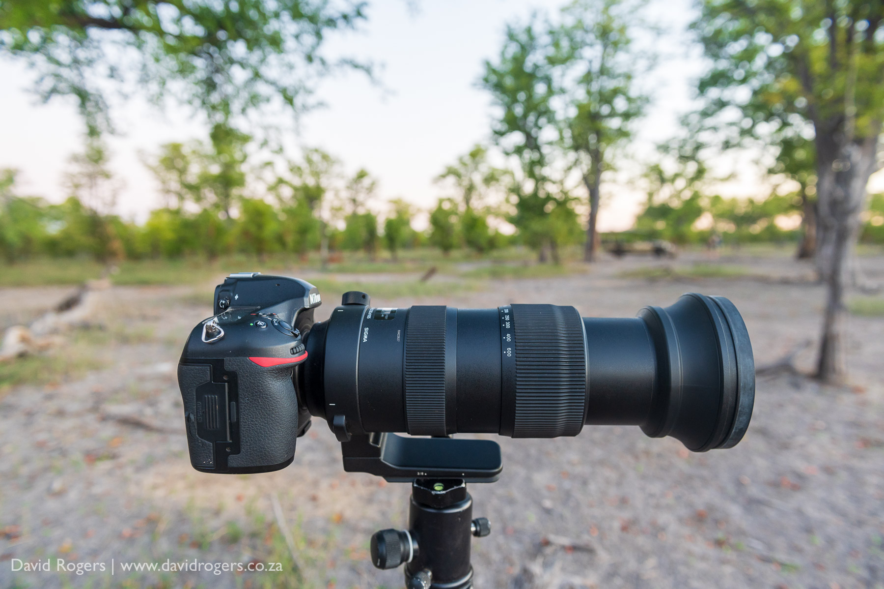 David Rogers Reviews The Sigma 60-600mm f/4.5-6.3 DG OS HSM Sports Lens