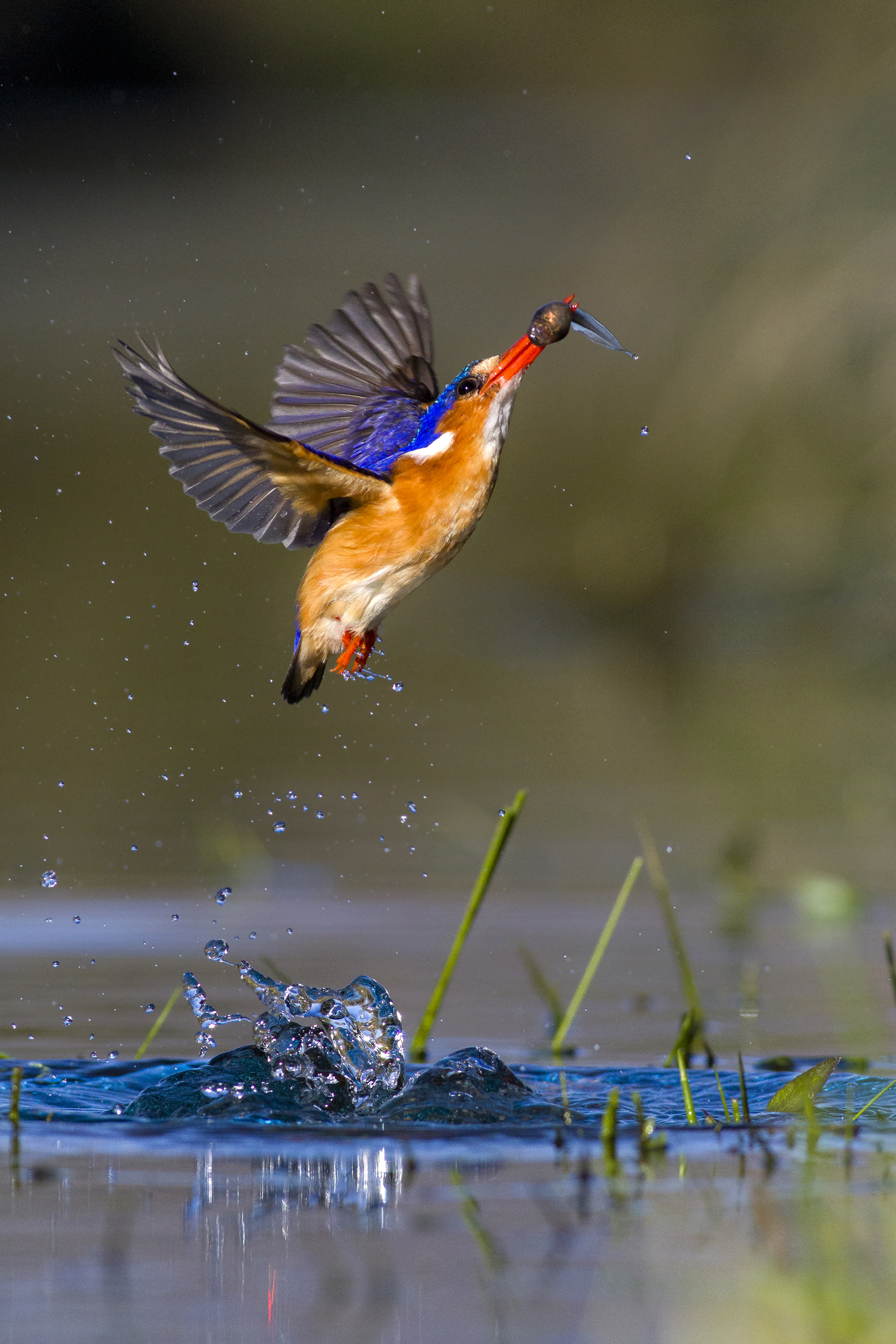 your best birding images professional category winner