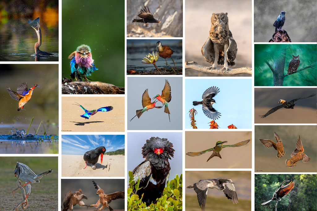 Your Best Birding Images: These Are Our Remarkable Winners