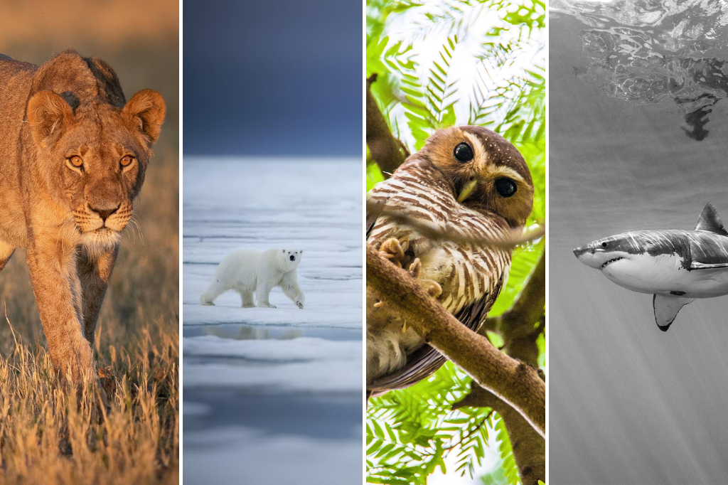 Winter Wildlife Photography: Get It Right With These Expert Tips