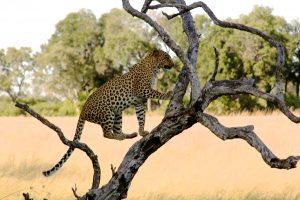 Beautiful wildlife around every turn