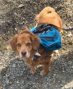 Rebecca's dog, Oisin, joining her on a hike in her own Kentucky back yard