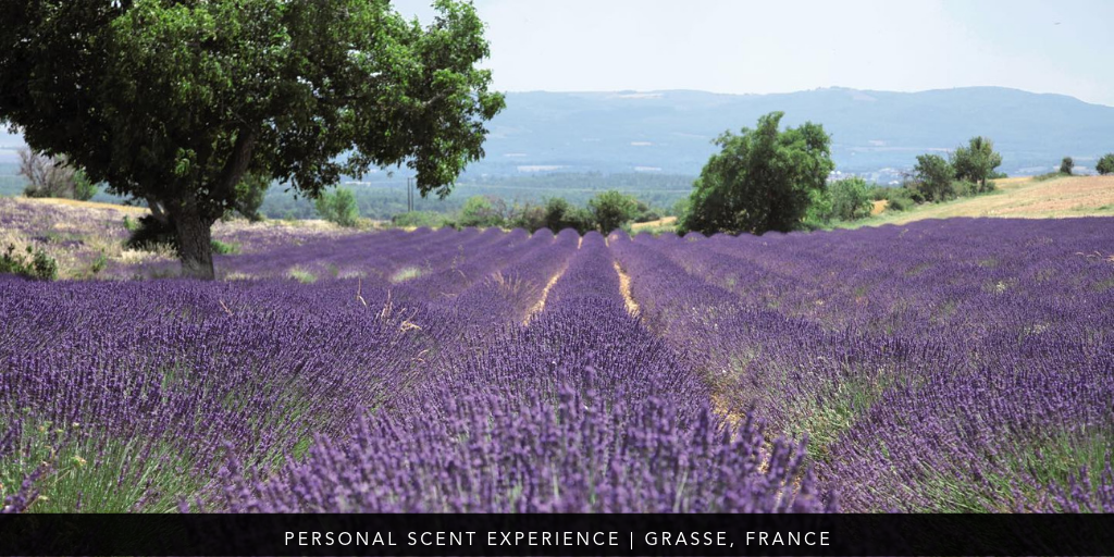Virtuoso Week 2019: Personal Perfume in France