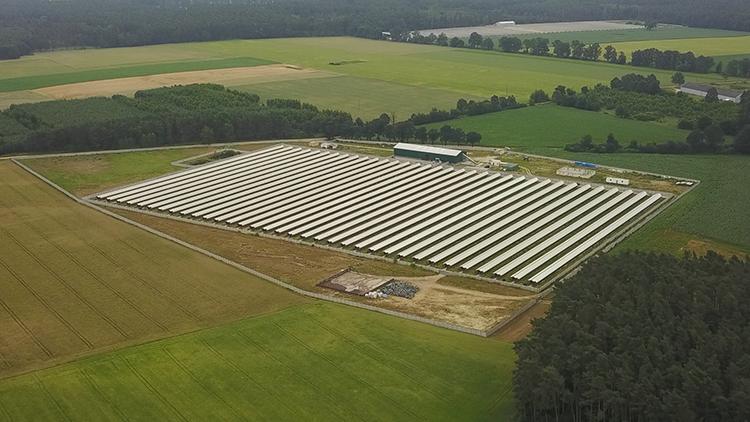 Holenderski przemysł futrzarski w Polsce