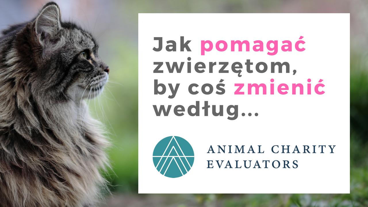 Jak pomagać zwierzętom, by coś zmienić według