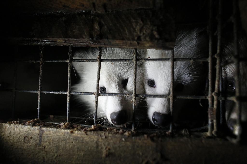 Wielka Demonstracja - Gdzie ta dobra zmiana dla zwierząt