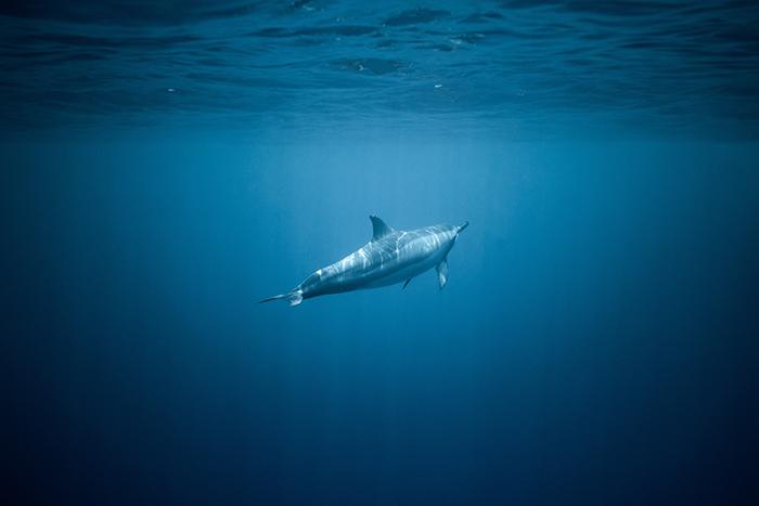delfiny mówią własnym językiem