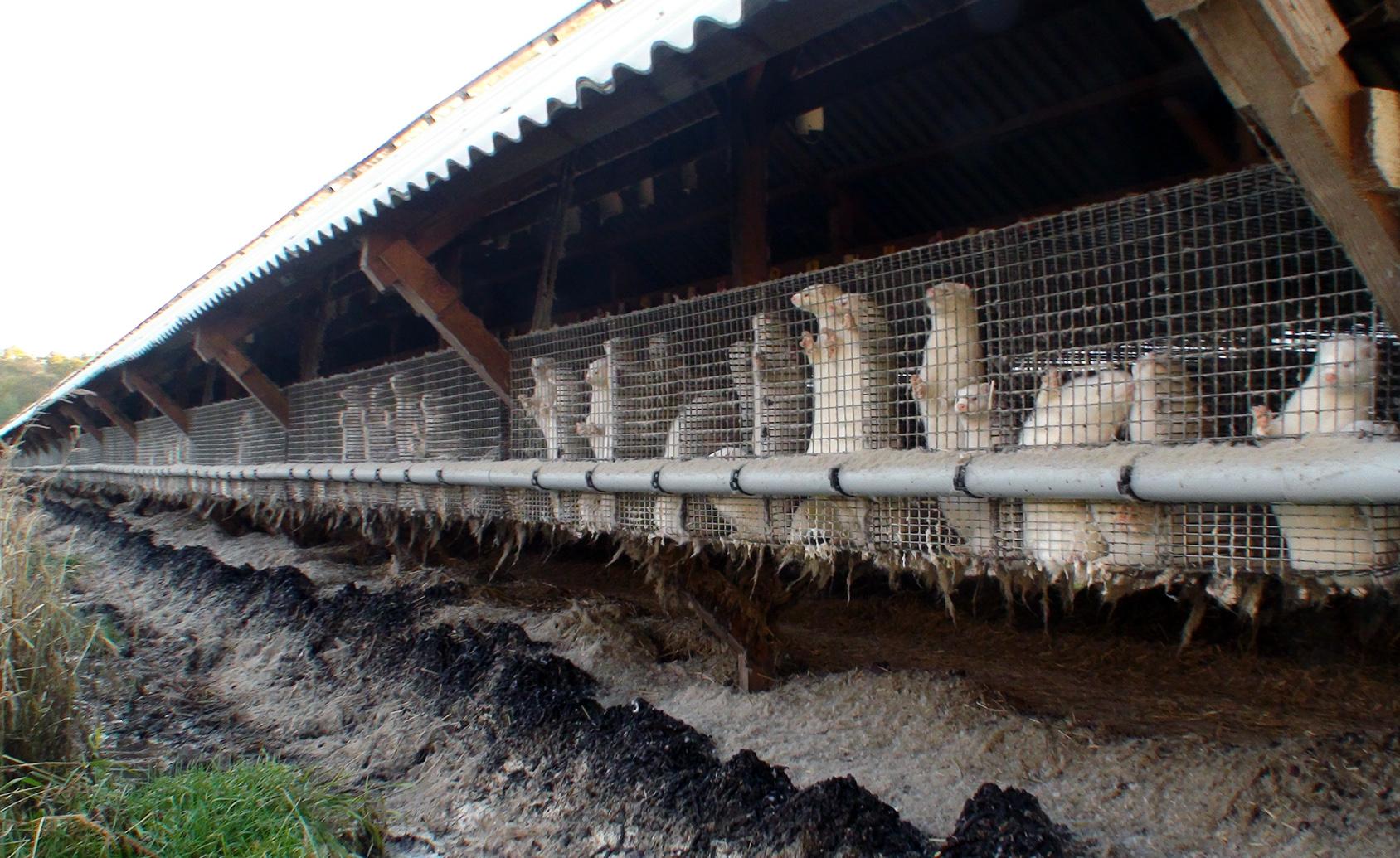 toksyczny przemysł futrzarski