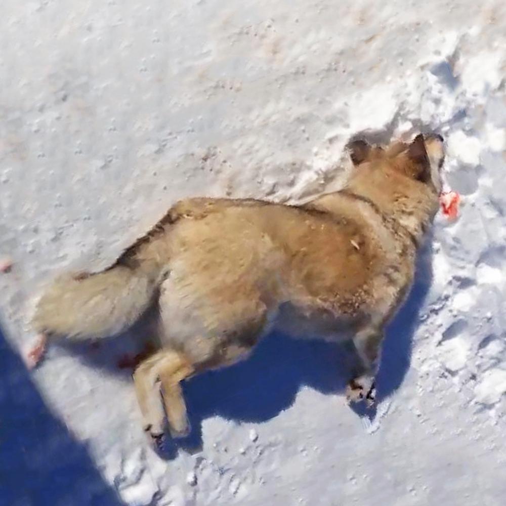Rosja wprowadza nową ustawę o ochronie zwierząt
