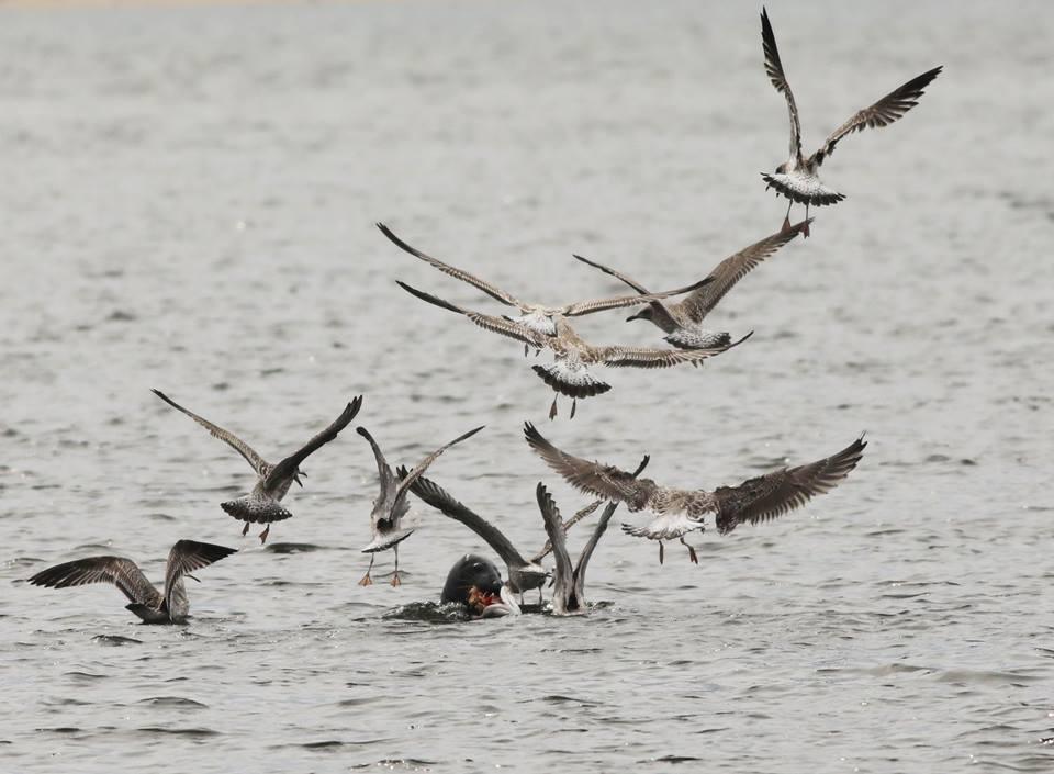 Jaki wpływ ma plastik na ptaki morskie?