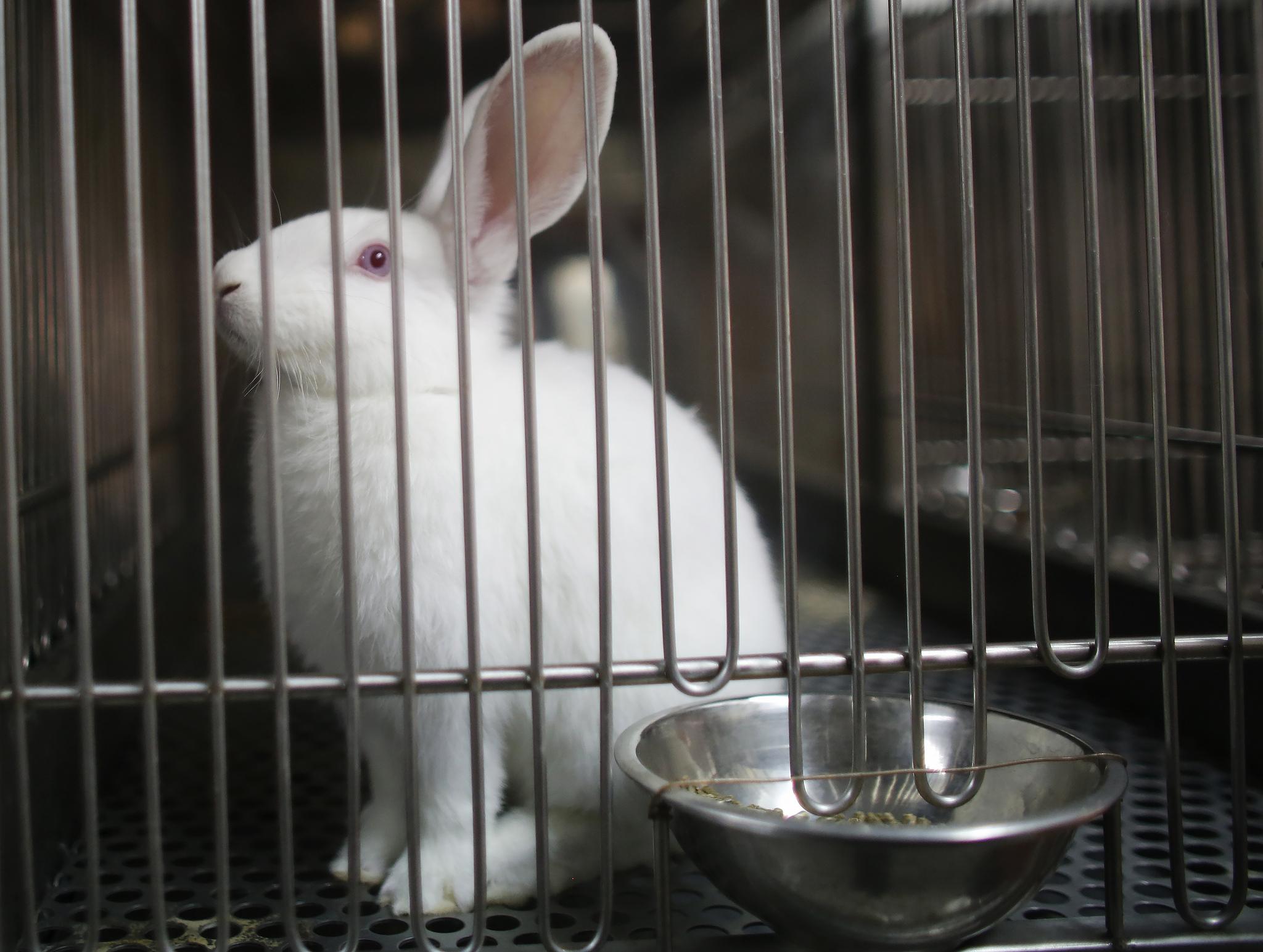 testowanie kosmetyków na zwierzętach