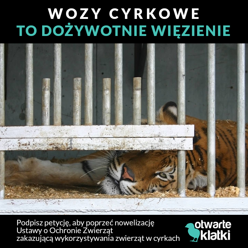 Cyrk bez zwierząt - zakaz na świecie i w Europie