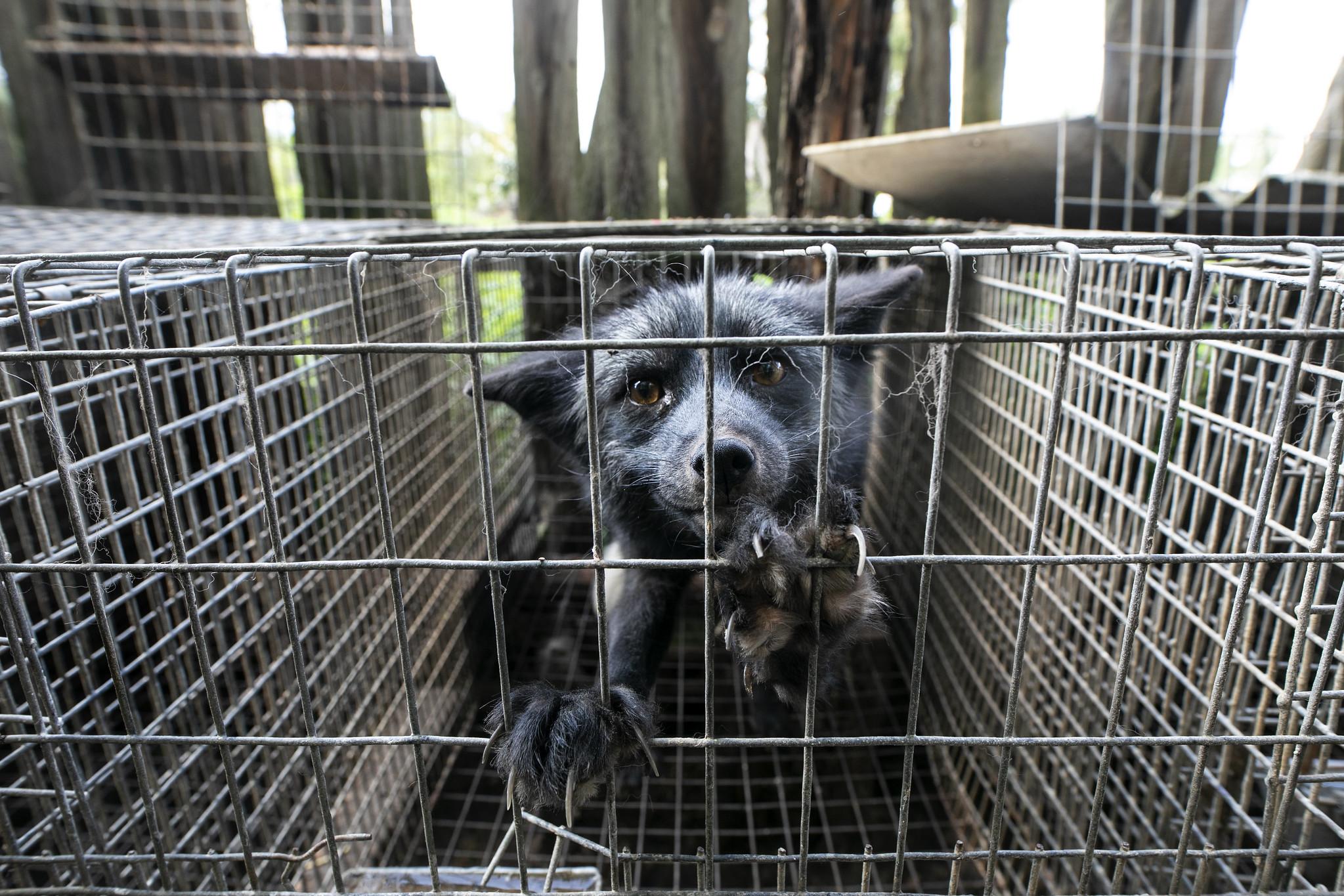 ratujemy zwierzęta