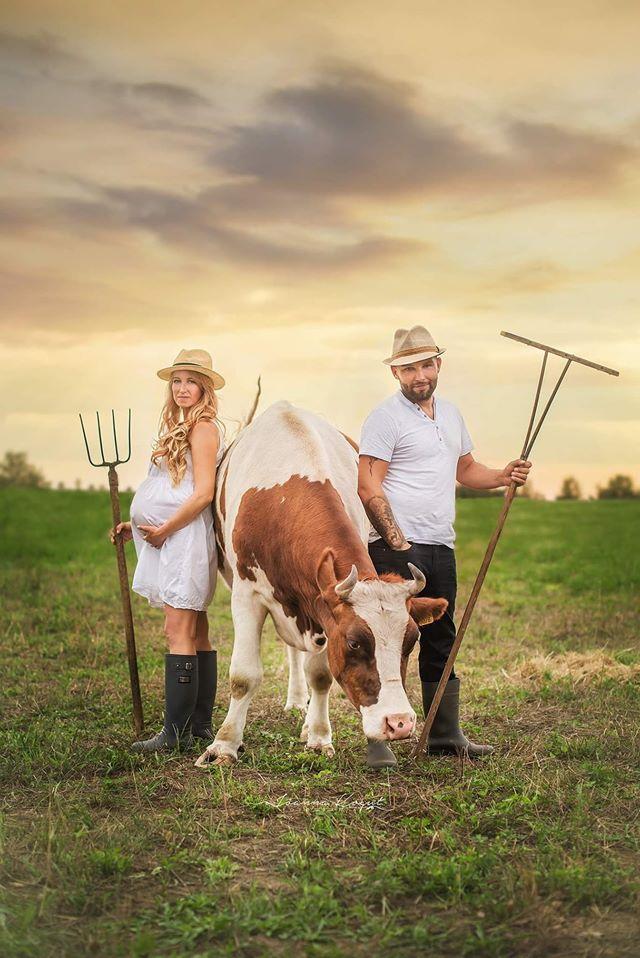 Stajnia karczów pomagajmy pomagać krowa