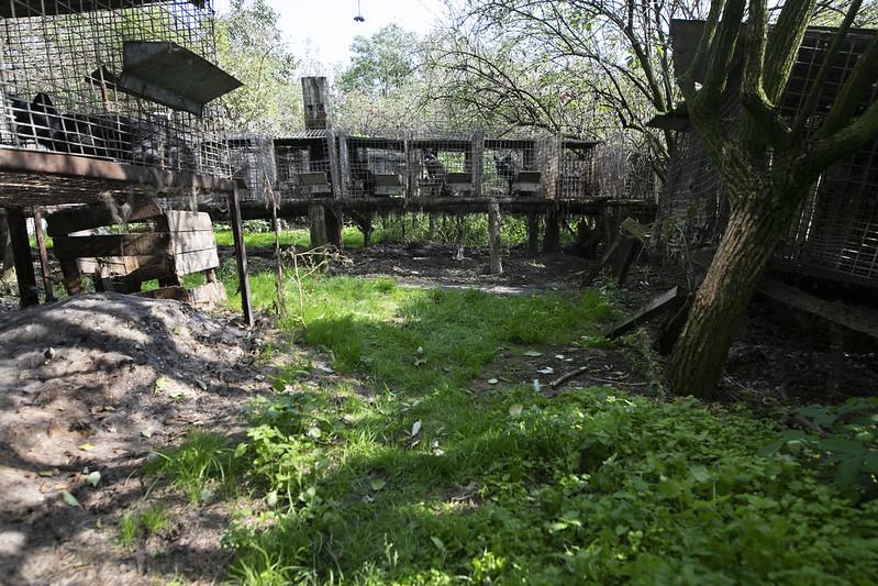 Interwencja na fermie lisów w Goliszowie, fot. Andrew Skowron