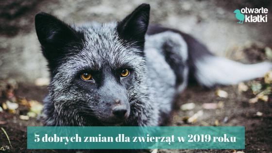 5 dobrych zmian dla zwierząt w 2019 roku