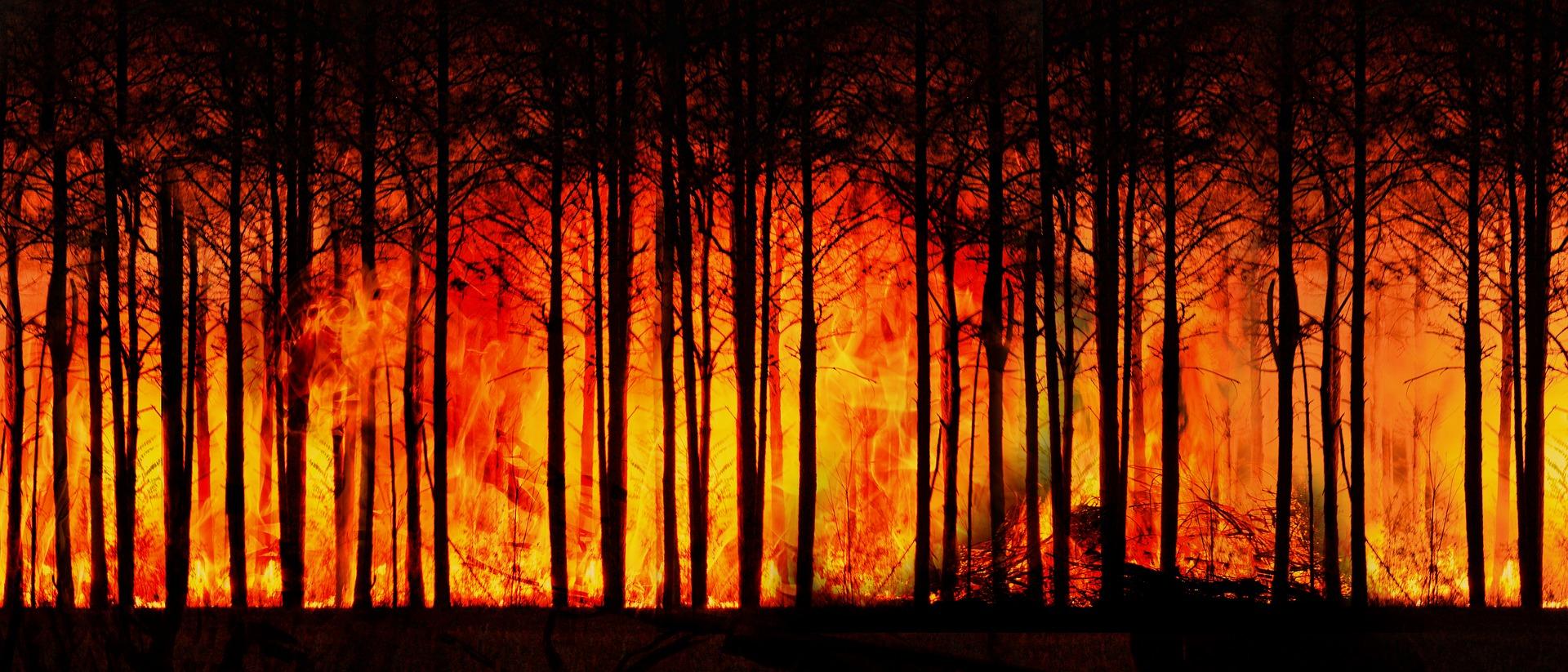 Ziemia, jak doprowadziliśmy do katastrofy - recenzja