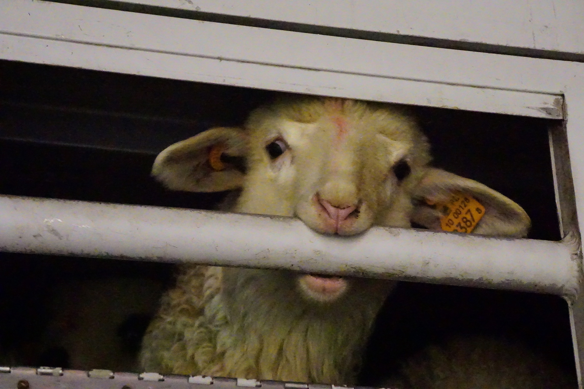 fot. Animal Welfare Foundation