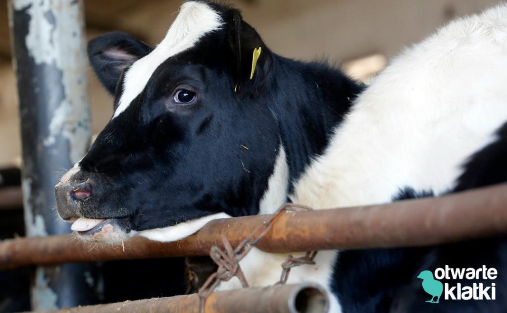 Wpływ hodowli zwierząt na środowisko