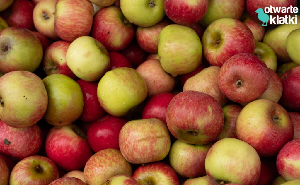 Skóra z jabłek