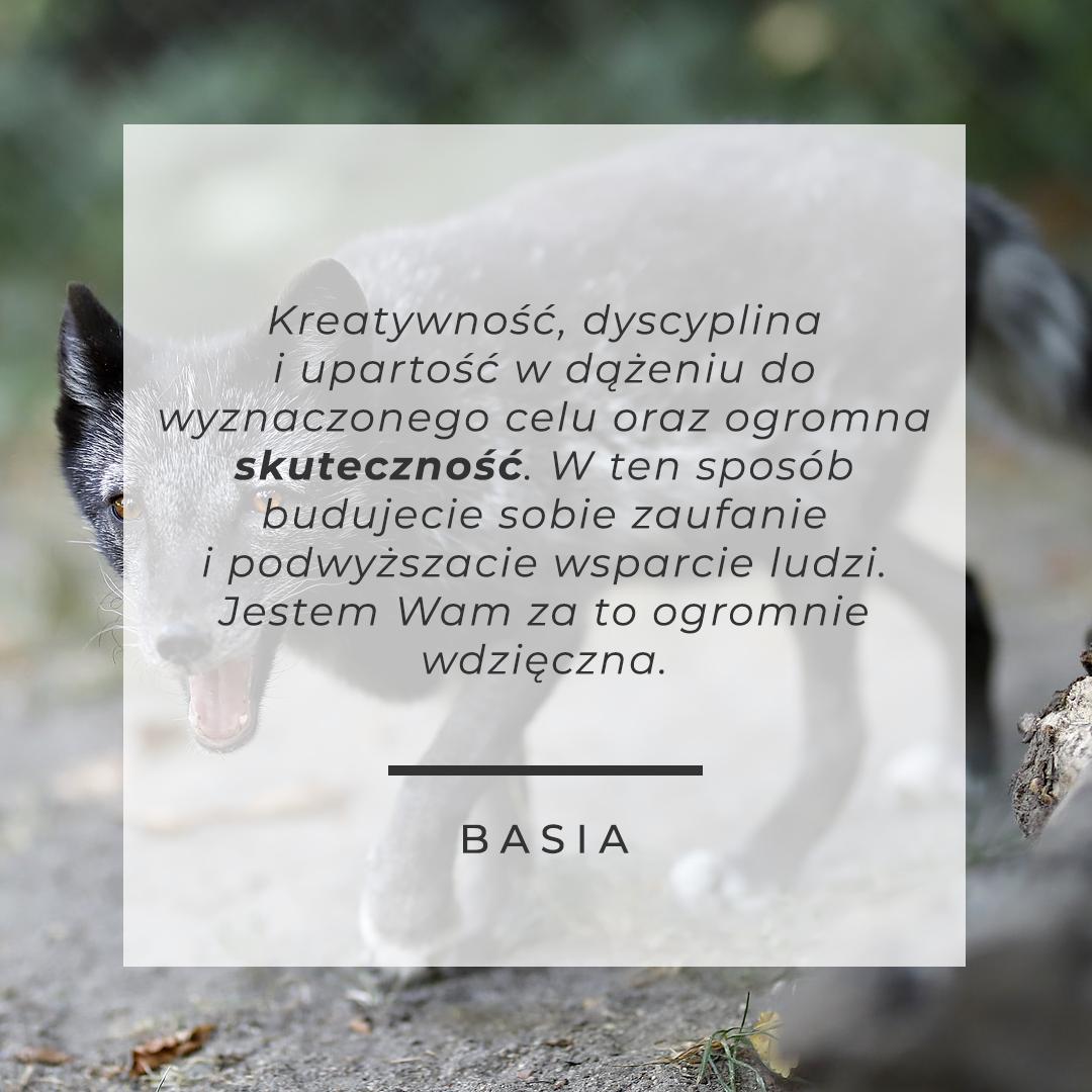 OBRAZEK: biegnący szczęśliwy czarny lis w naturze. CYTAT: Kreatywność, dyscyplina i upartość w dążeniu do wyznaczonego celu oraz ogromna skuteczność. W ten sposób budujecie sobie zaufanie i podwyższacie wsparcie ludzi. Jestem Wam za to ogromnie wdzięczna. - Basia