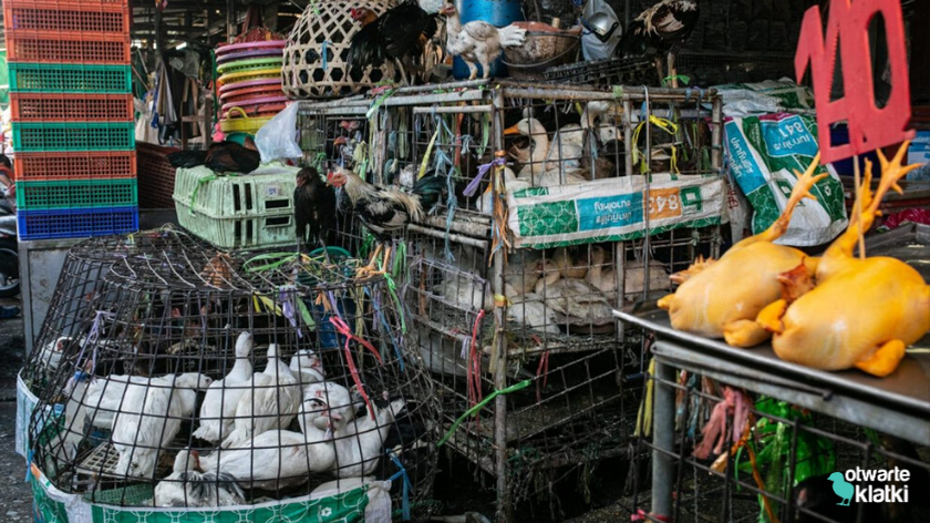 mokry targ Thailand