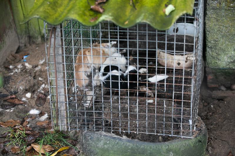Martwe psy podczas interwencji na fermie futerkowej w Durzynie