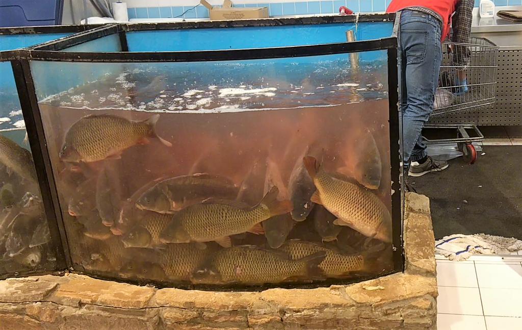 Sprzedaż żywych ryb