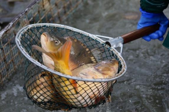 odłów ryb