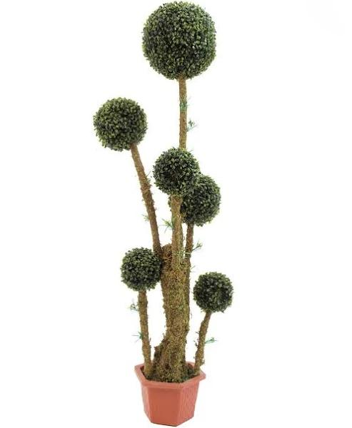 EUROPALMS Box ball tree, 163cm - Trees