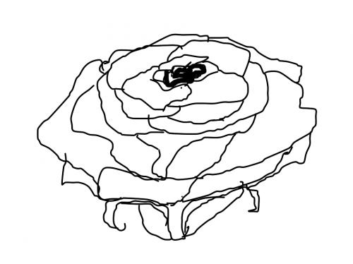 Rose [sketch]
