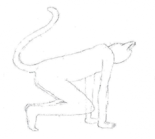 Feline pose