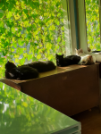 Sleeps by the Vines - Cats